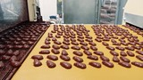 Conveyor with chocolate candies. Candy factory. - 232735043