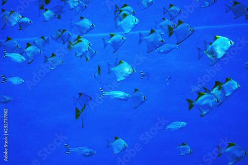 Leinwandbild Motiv Colorful aquarium fish, algae and corals in the dark blue water in the oceanic center.