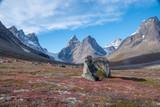 Im Dronning Marie Dal im Skjoldungen Sund in Ost-Grönland