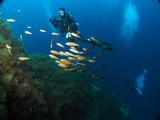 Scuba Diving in Malta and Gozo - 232753482