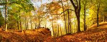 "Постер, картина, фотообои ""Autumn forest in mountain at sunset with sun"""
