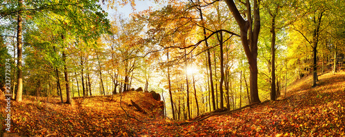 Leinwanddruck Bild Autumn forest in mountain at sunset with sun