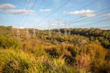 Landscape in Melbourne - 232786013