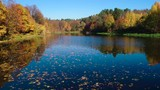 Colorful autumn forest wood on the lake - 232795835