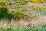 colorful riparian scenery - 232795838