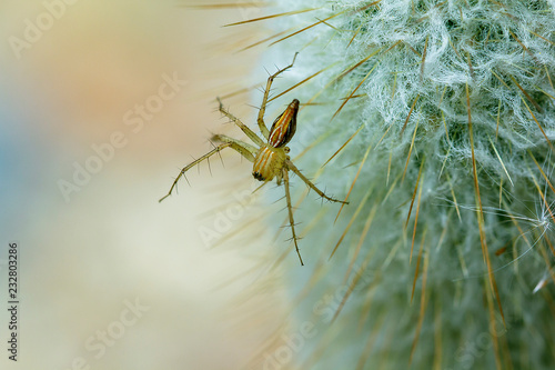 Foto Murales Spider on a cactus