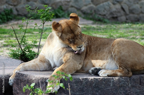 Fridge magnet Animals at the Zoo
