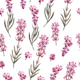 Watercolor pattern with Lavender. Hand painting. Watercolor. - 232838891
