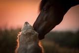 Tierliebe zwischen Hund und Pferd - 232844624
