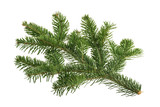 Fir tree isolated on white background - 232845201