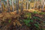 Forêt en automne - 232858057
