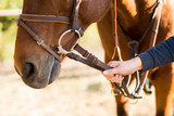 Horse halter,leather covered chain lead, close-up. Horse theme    - 232864671