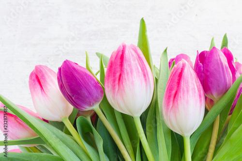 Fiołkowi świezi tulipanowi kwiaty wiosłują na białym drewnianym tle z kopii przestrzenią