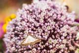 Papillon posé sur des fleurs parme - 232879424