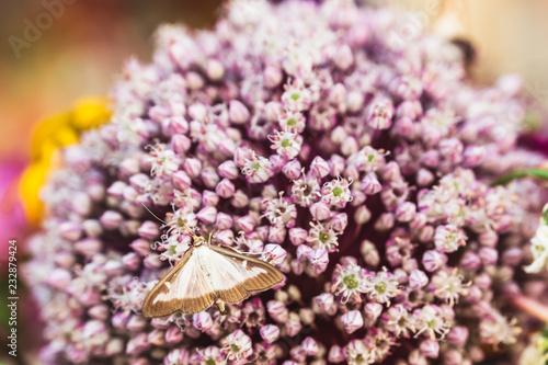 Motyli odpoczywać na Parma kwiatach