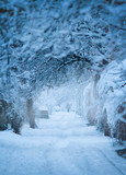 Snowfall. City street with trees covered with snow. Blue winter morning, snow landscape