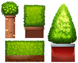 Set of green plant - 232895618