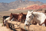 close up of horses tied up to post. With mountains in background