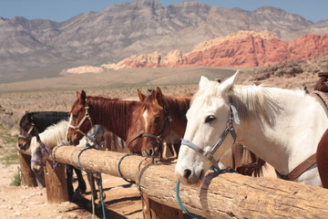 close up of horses tied up to post. With mountains in background © Dawn