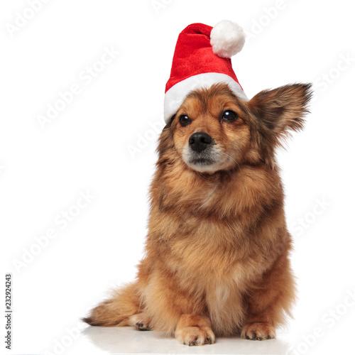 adorable brązowy pies metis z santa cap wygląda na stronie