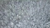 A clean and smooth beautiful snowy winter forest aerial with the camera looking straight down - 232928448