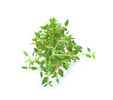 thyme isolated on white background - 232936652