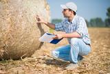 Farmer checking a hay bale quality - 232939498