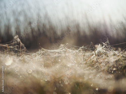 Dew drops on the cobwebs in the grass. Beauty in nature. Macro landscape - 232940801