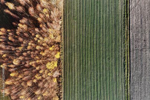 Fototapeta Autumn- typical Polish landscape with fields.
