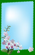 light orchid flowers in green frame on blue background