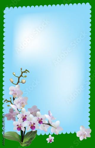 lekkie kwiaty orchidei w zielonej ramie na niebieskim tle