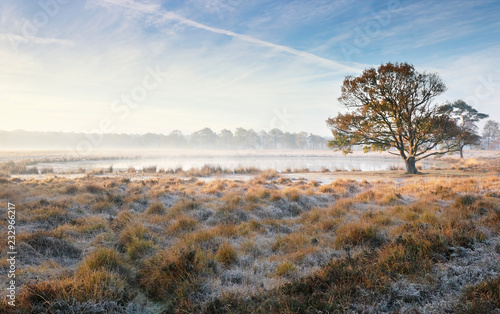 Leinwandbild Motiv oak tree by lake on misty frosty morning
