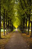 Autumn alley - 232979400