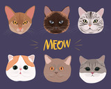 Set of cats of different breeds. Editable vector illustration