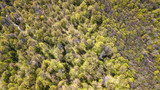 Aerial view of yellow trees in autumn