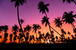 Leinwanddruck Bild - Silhouette coconut palm trees with sunset and flare sky background.