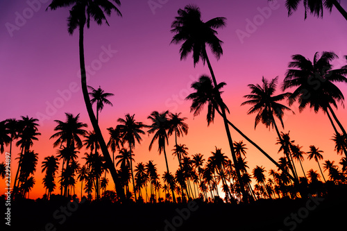 Leinwanddruck Bild Silhouette coconut palm trees with sunset and flare sky background.