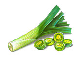 Colorful and juicy illustration of green onion leek. Drawing alcohol markers useful vegetable. Veggie food. - 232997407