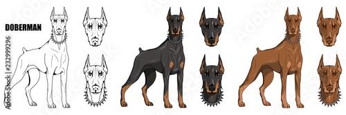 doberman pinscher, american doberman, pet logo, dog doberman, colored pets for design, colour illustration suitable as logo or team mascot, dog illustration, vector graphics to design