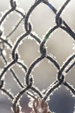 Frozen fence made of metal mesh covered with frost crystals, an early sunny cold morning, on a blurred background. Close-up. - 233003653