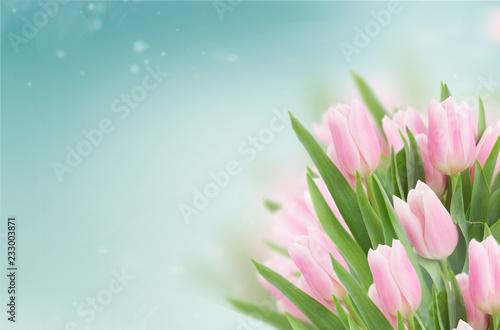 bliska miękkich różowy świeżych tulipanów na niebieskim tle nieba