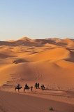 Desert camel trek at sunset, Sahara, Merzouga - 233012617