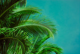 Palm trees under blue sky. Vintage post processed. - 233024239