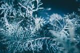 Christmas background. Green fir tree. - 233025455