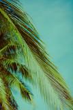 Palm trees under blue sky. Vintage post processed. - 233027675