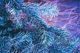 Christmas background. Green fir tree. - 233030209