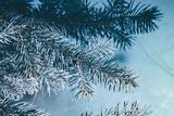 Christmas background. Green fir tree. - 233030463