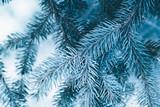 Christmas background. Green fir tree. - 233030848