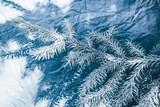 Christmas background. Green fir tree. - 233031057