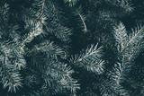 Christmas background. Green fir tree. - 233031410